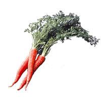 京野菜検定