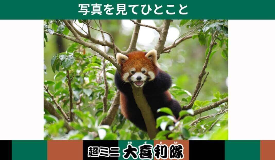 お題「超ミニ大喜利隊」楽天超ミニバイト